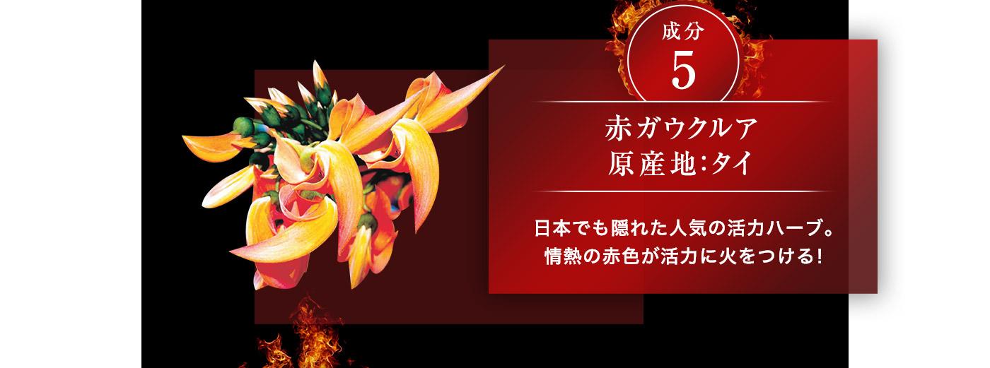 成分5 赤ガウクルア 原産地:タイ 日本でも隠れた人気の活力八一ブ。情熟の赤色が活力に火をつける!